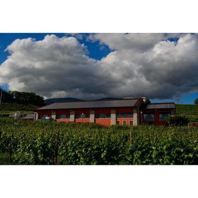 Azienda Agricola Drusian Francesco - Vini e spumanti - produzione e ingrosso Bigolino