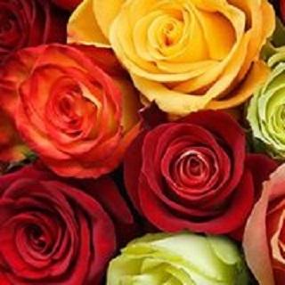 Bed & Breakfast delle Rose - Alberghi Vado Ligure