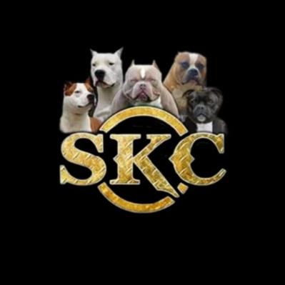 Dog Performance - Animali domestici - toeletta Rende