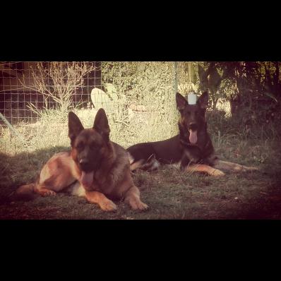 Dog School – Educazione Cinofila - Pensione per Cani - Animali domestici - allevamento e addestramento Montelupo Fiorentino