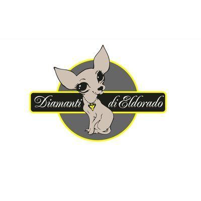 Allevamento amatoriale Chihuahua Diamanti Di Eldorado - Animali domestici - allevamento e addestramento Grugliasco