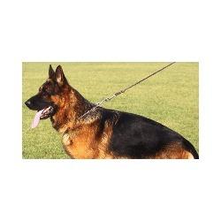 Laner Astrid Pensione per Cani - Animali domestici - vendita Brunico