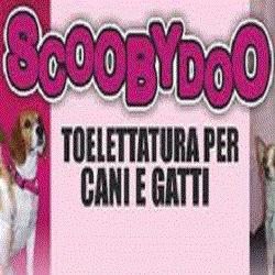 Toelettatura Scoobydoo