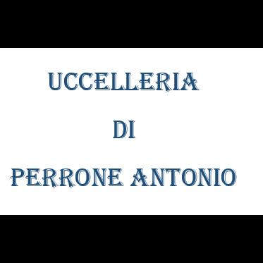 Uccelleria di Perrone Antonio - Animali domestici - vendita Napoli
