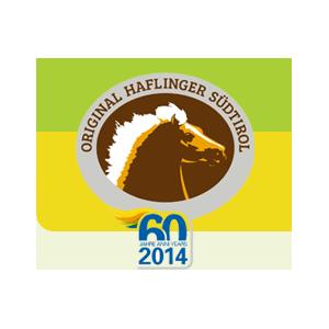 Haflinger Sudtirol - Animali domestici - allevamento e addestramento Bolzano
