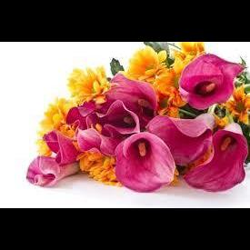 Fiori El Cantun D' Fiu' di Abbona Elisa - Fiori e piante - vendita al dettaglio Dogliani