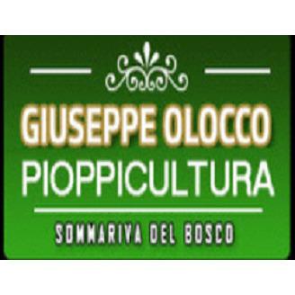 Pioppicoltura Vivaio Olocco - Lavori agricoli e forestali Sommariva del Bosco
