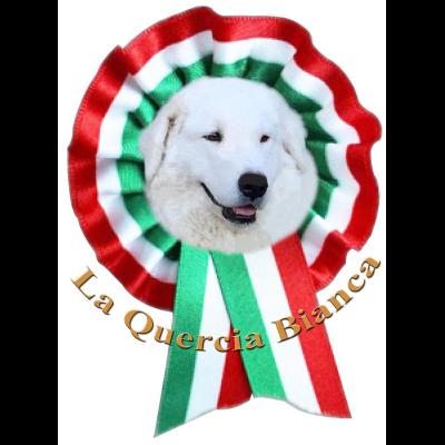 Allevamento La Quercia Bianca - Animali domestici - allevamento e addestramento Bosconero