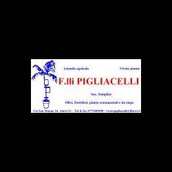 Azienda Agricola Pigliacelli - Vivai piante e fiori Alatri