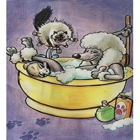 Amici a 4 Zampe - animali domestici - servizi Assemini