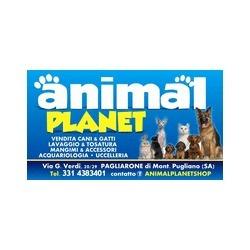 Animal Planet - Animali domestici - toeletta Montecorvino Pugliano