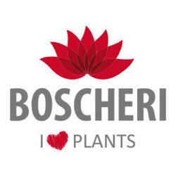Matteo Boscheri Ingrosso - Vivai piante e fiori Sutri