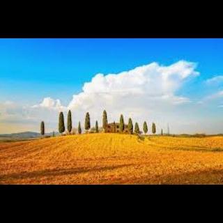 Immobiliare Il Gelso - Agenzie immobiliari Firenze