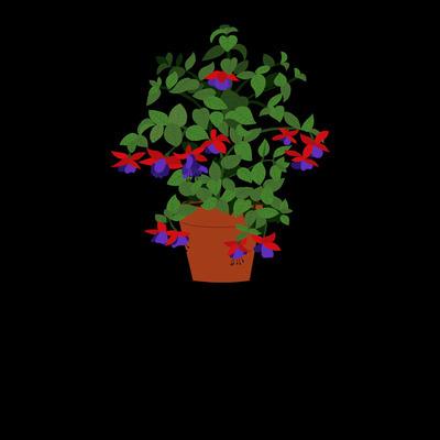 Roncador Valentino Fiori - Fiori e piante - vendita al dettaglio Mezzolombardo