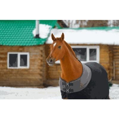 Equus Globe - Sport - attrezzature ed abbigliamento per equitazione Borgo Ticino