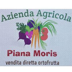 Azienda Agricola Piana Moris - Aziende agricole Bologna