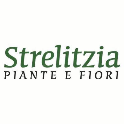Strelitzia Piante e Fiori - Vivai piante e fiori Colle di Val d'Elsa