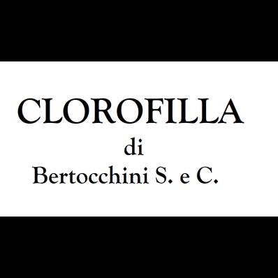 Clorofilla - Fiori e piante - vendita al dettaglio Capannori