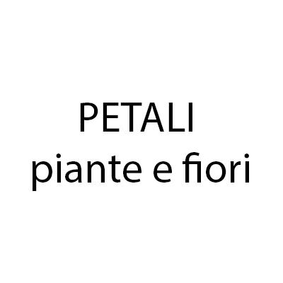 Petali  Piante e Fiori - Fiori e piante - vendita al dettaglio Grottammare