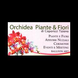 Fiori e Piante Orchidea - Fiori e piante - vendita al dettaglio Larino
