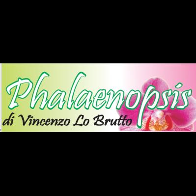 Phalaenopsis Fioreria - Fiori e piante - vendita al dettaglio Ribera