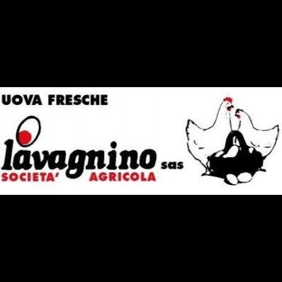 Societa' Agricola Lavagnino - Bestiame - allevamento e commercio Spigno Monferrato