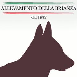 Allevamento della Brianza - Animali domestici - allevamento e addestramento Seregno