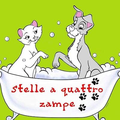 Stelle a 4 Zampe - Toelettatura - Pet Food - Alimentazione per Cani - Collari - animali domestici - servizi Nicastro
