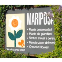 Mariposa - Fiori e piante - vendita al dettaglio Ameglia