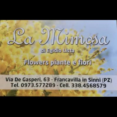 La Mimosa Flowers di Egidio Lista