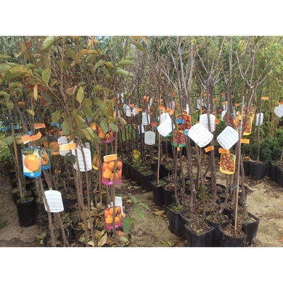 Vivaio Ianniello - Vivai piante e fiori Buccino