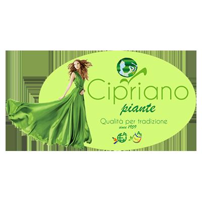 Vivai Cipriano - Vivai piante e fiori San Biagio