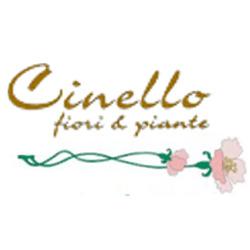 Vivaio Fiori e Piante Garden Cinello - Fiori e piante - vendita al dettaglio Asolo