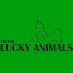 Centro Lucky Animals - Animali domestici - vendita Terranuova Bracciolini