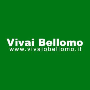 Vivai Bellomo - Vivai piante e fiori Atena Lucana