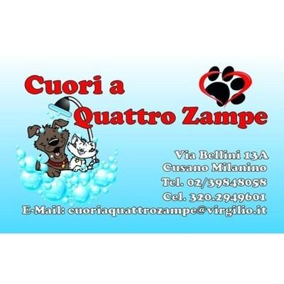 Cuori a Quattro Zampe - Animali domestici - allevamento e addestramento Cusano Milanino