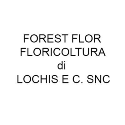 Forest Flor Floricoltura