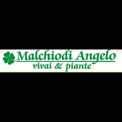Malchiodi Angelo Vivai e Piante - Giardinaggio - servizio Concorezzo