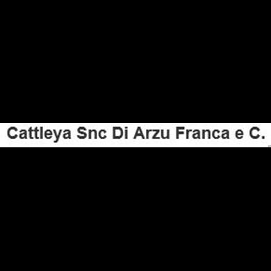 Cattleya - Fiori e piante - vendita al dettaglio Oliena