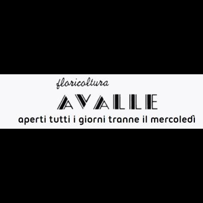 Avalle Floricoltura - Vivaio - Fiorai - accessori e forniture Collegno